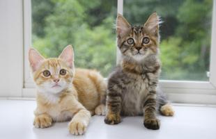 猫の病気の予防