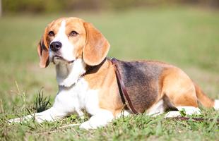 犬の病気の予防
