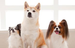 さまざまな犬種をトリミング
